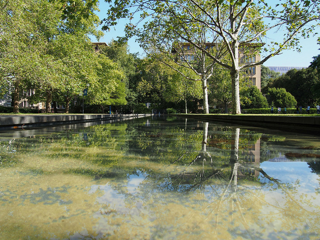 Reflection on South Lawn pond